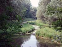 A gemenci erdő. társkeresés - társkeresők - fényképes - keresztény - keresztyény - külföldi - nemzetközi - hirdetések